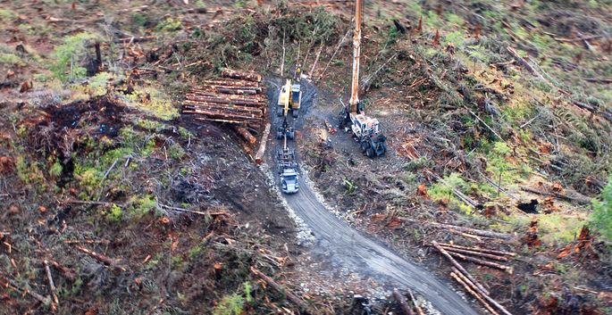 View from a helicopter of a clearcut and logging road in the Tongass forest